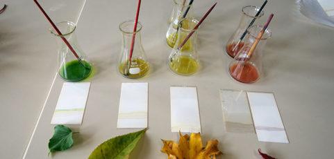 Projektklasse Naturwissenschaften untersucht Herbstlaub